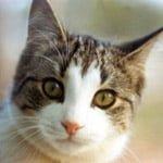 Γάτα γαβγίζει