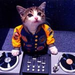 cat DJ kittens